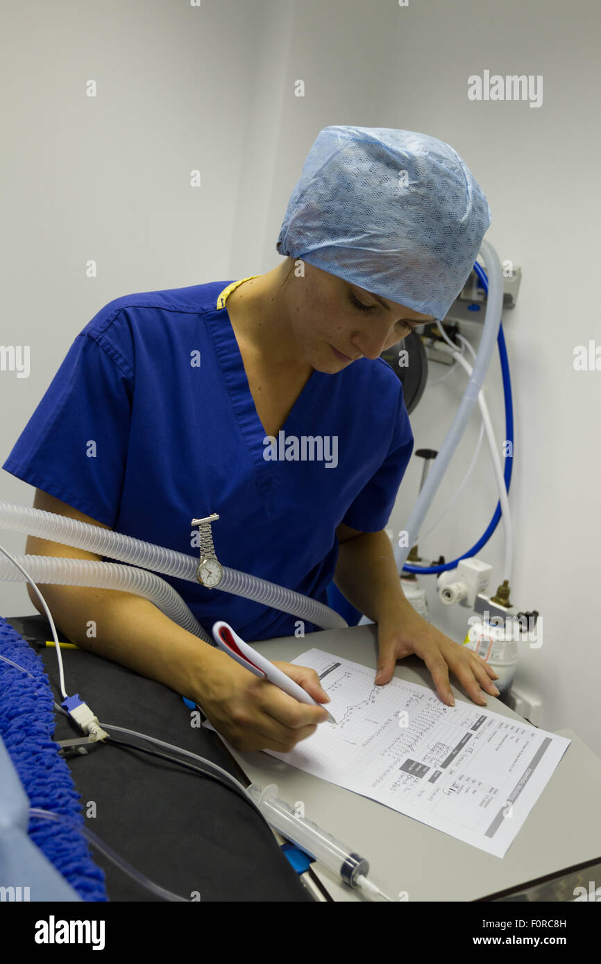 A veterinary nurse writing during surgery - Stock Image