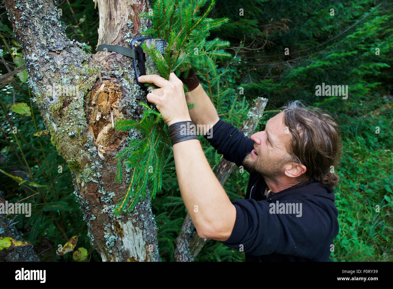 Wildlife biologist mounting an infra-red triggered wildlife monitoring camera to a tree pointing towards a wallow - Stock Image