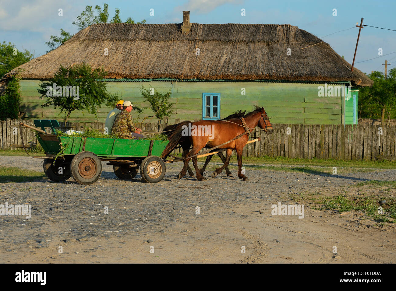 Traditional means of transport, horse and cart, Letea, Danube delta rewilding area, Romania May 2012 - Stock Image