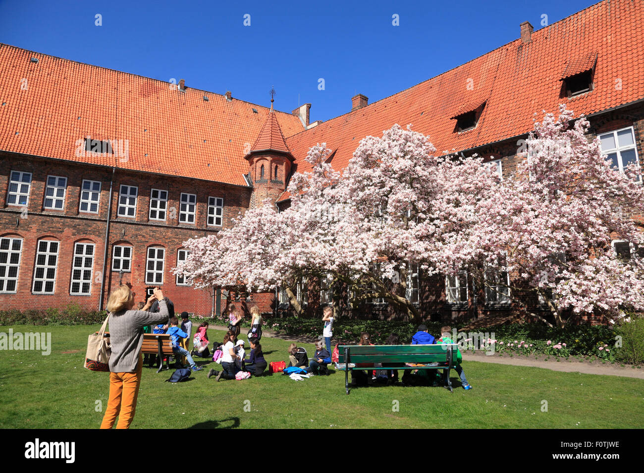 Blooming  Magnolia tree at town hall garden, Lueneburg, Lüneburg, Lower Saxony, Germany, Europe Stock Photo