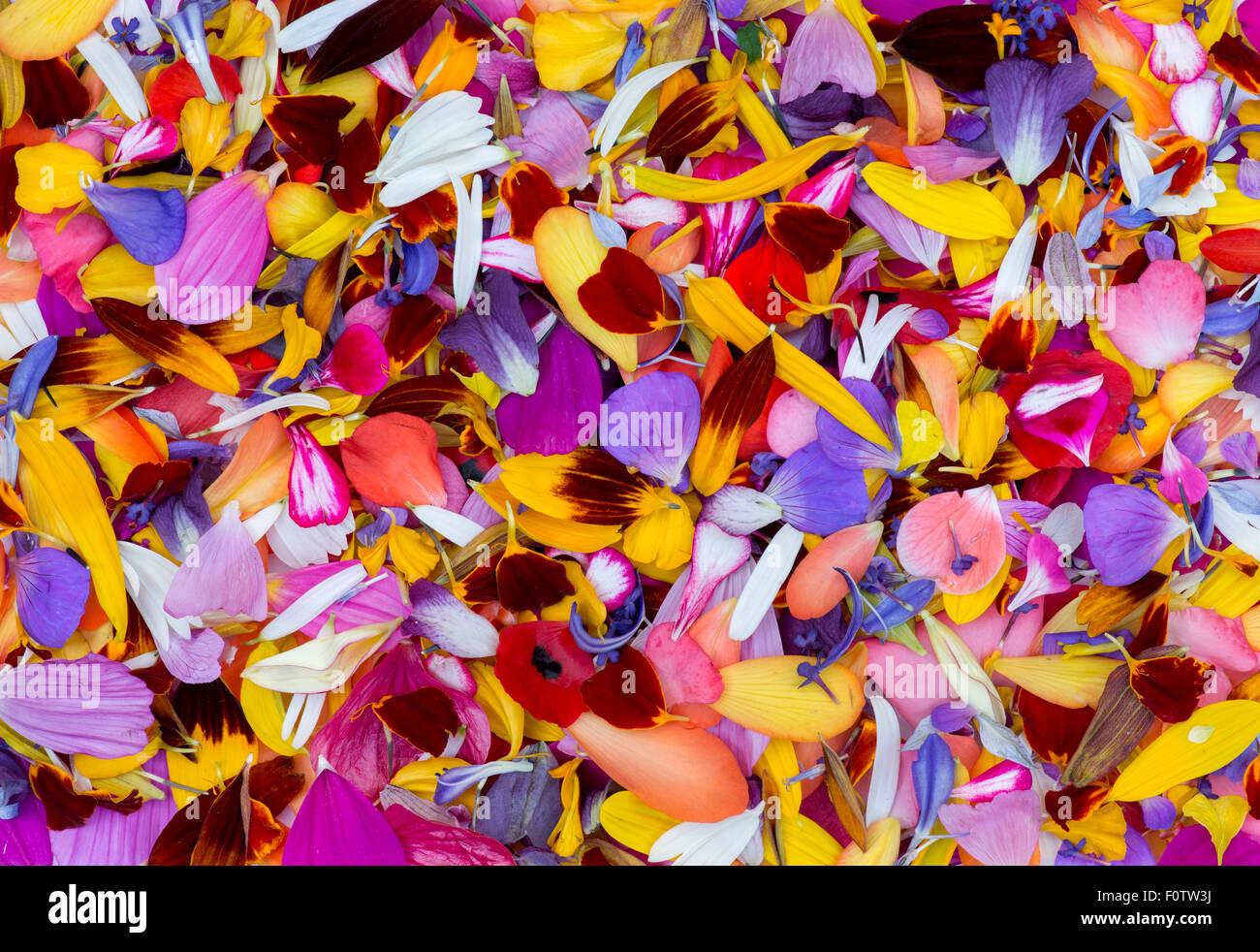 Late summer flower petals pattern - Stock Image