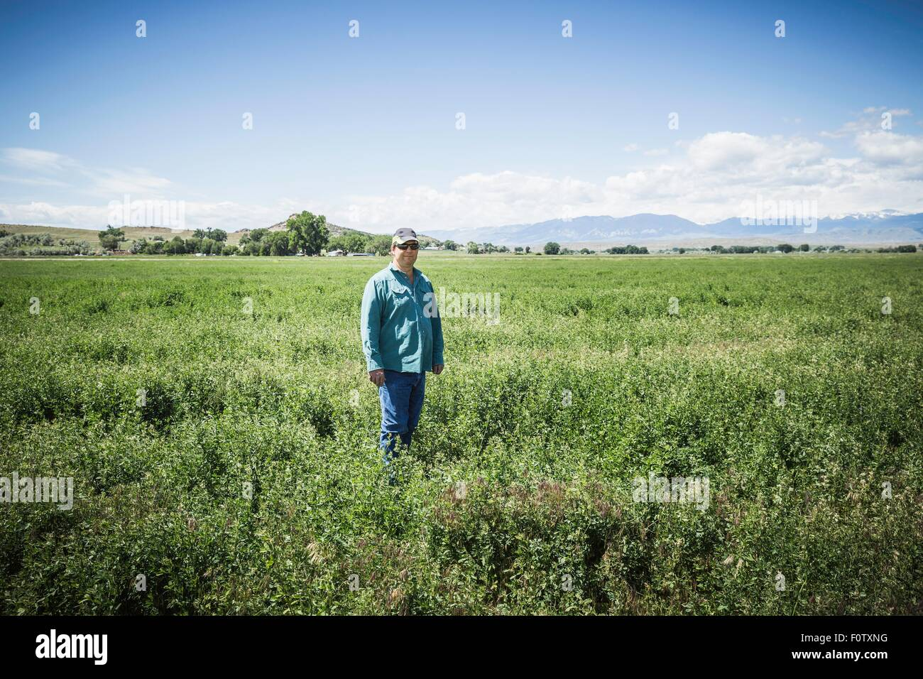 Mature man in field, Billings, Montana, USA - Stock Image