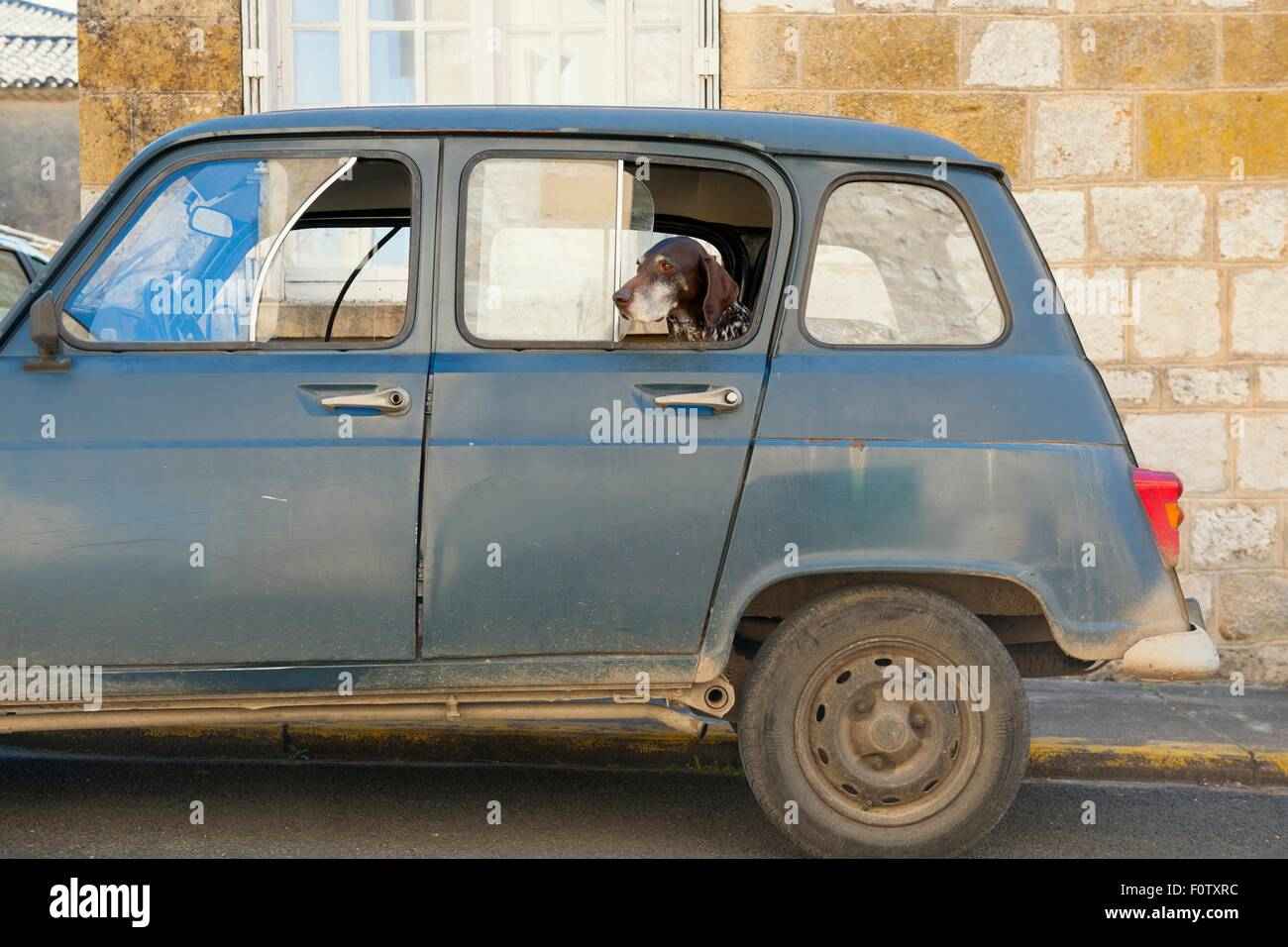 Portrait of dog looking out from parked car window, Monpazier, Dordogne, France - Stock Image
