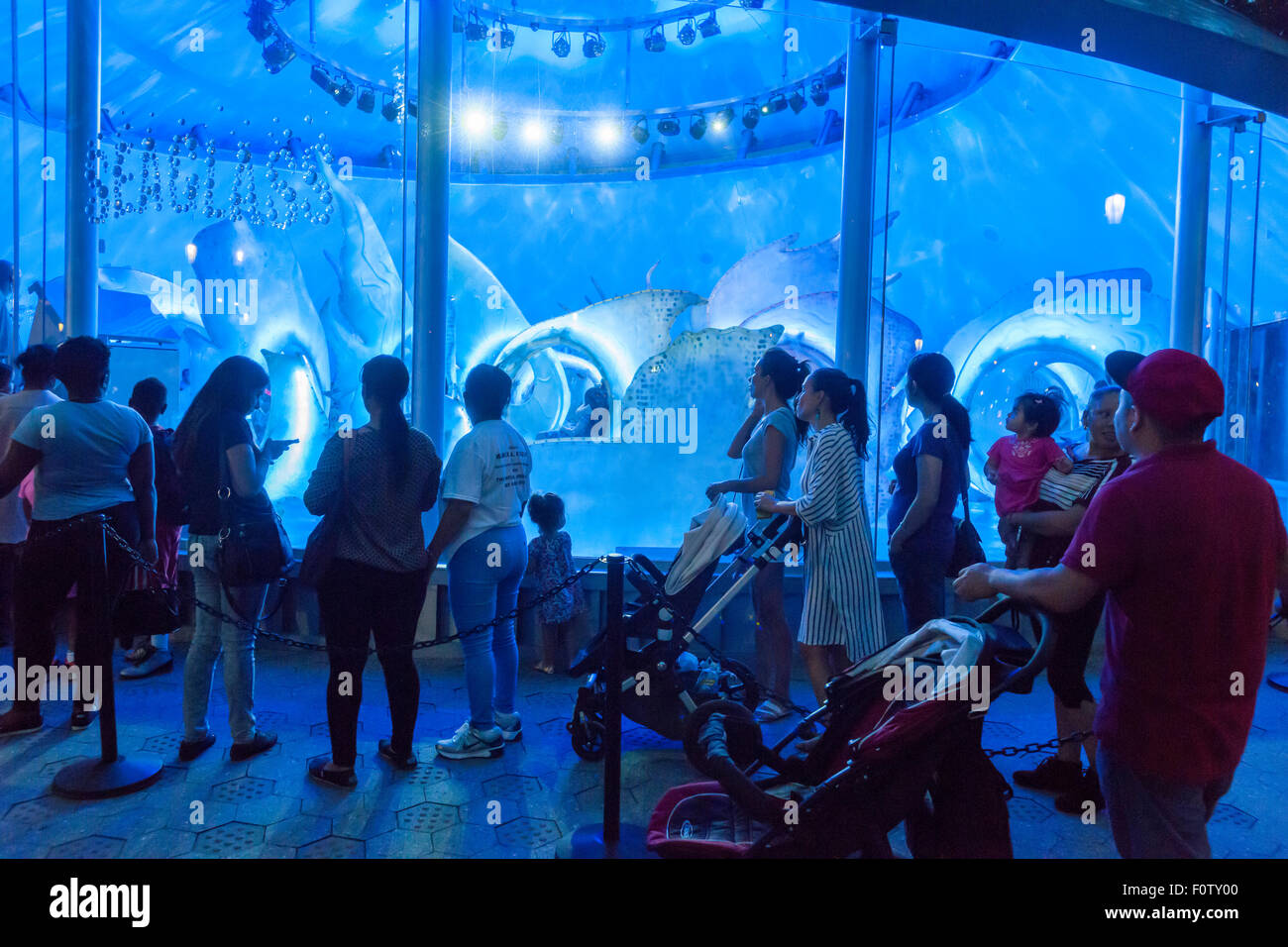 New York, NY, USA. 21st Aug, 2015. Crowds of excited adults and children take rides on opening day of the SeaGlass - Stock Image