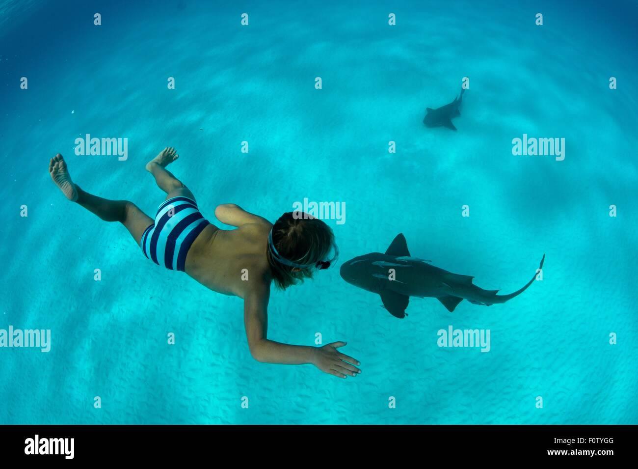 Boy with nurse shark, Bimini, Bahamas - Stock Image