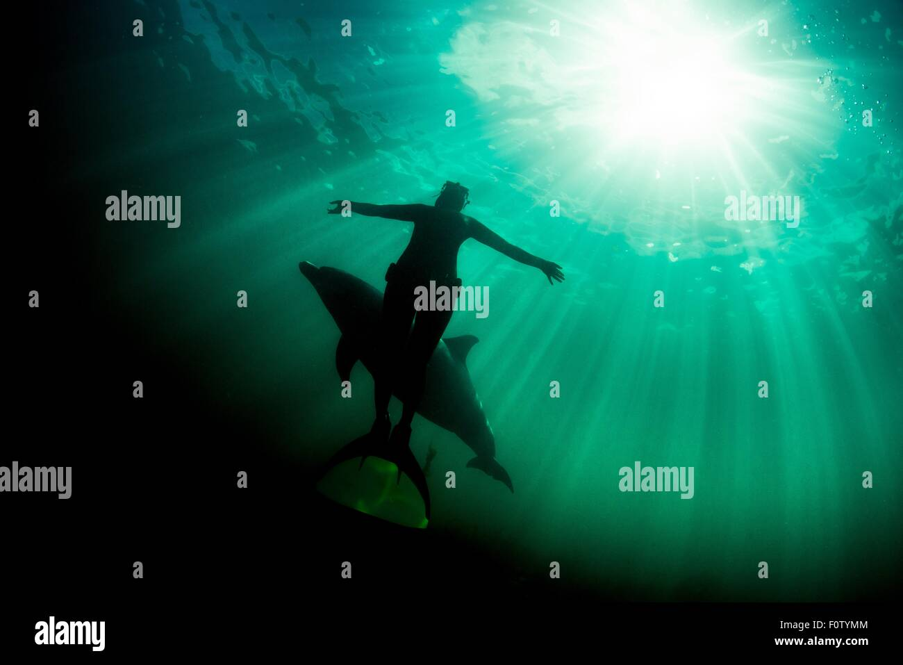 Freediver and Bottlenose dolphin - Stock Image