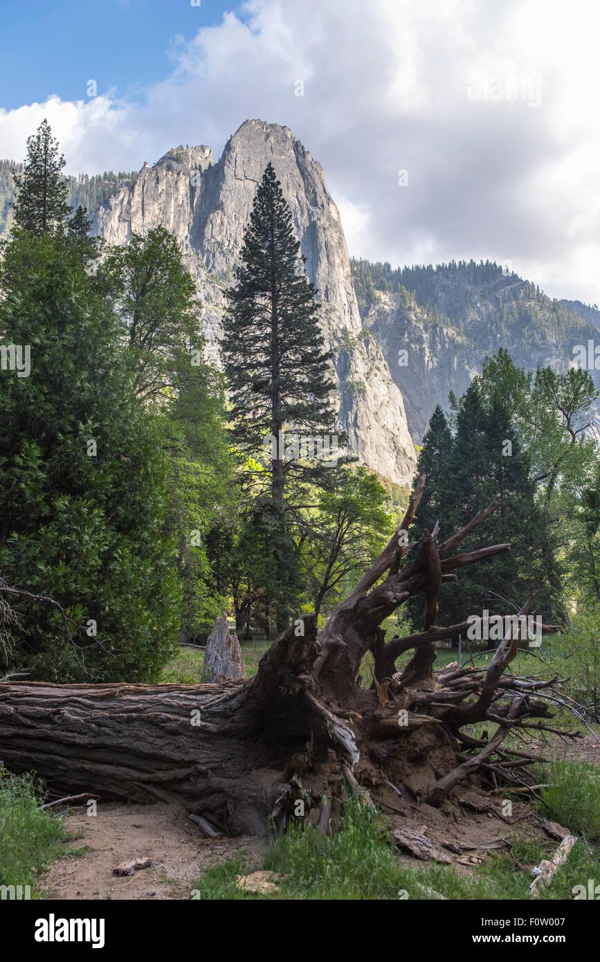 View of mounain and fallen tree, Yosemite National Park, California, USA - Stock Image