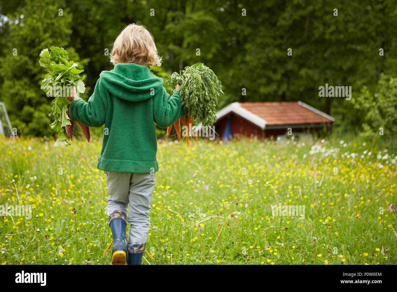 Rear view of boy carrying carrots across garden Stock Photo