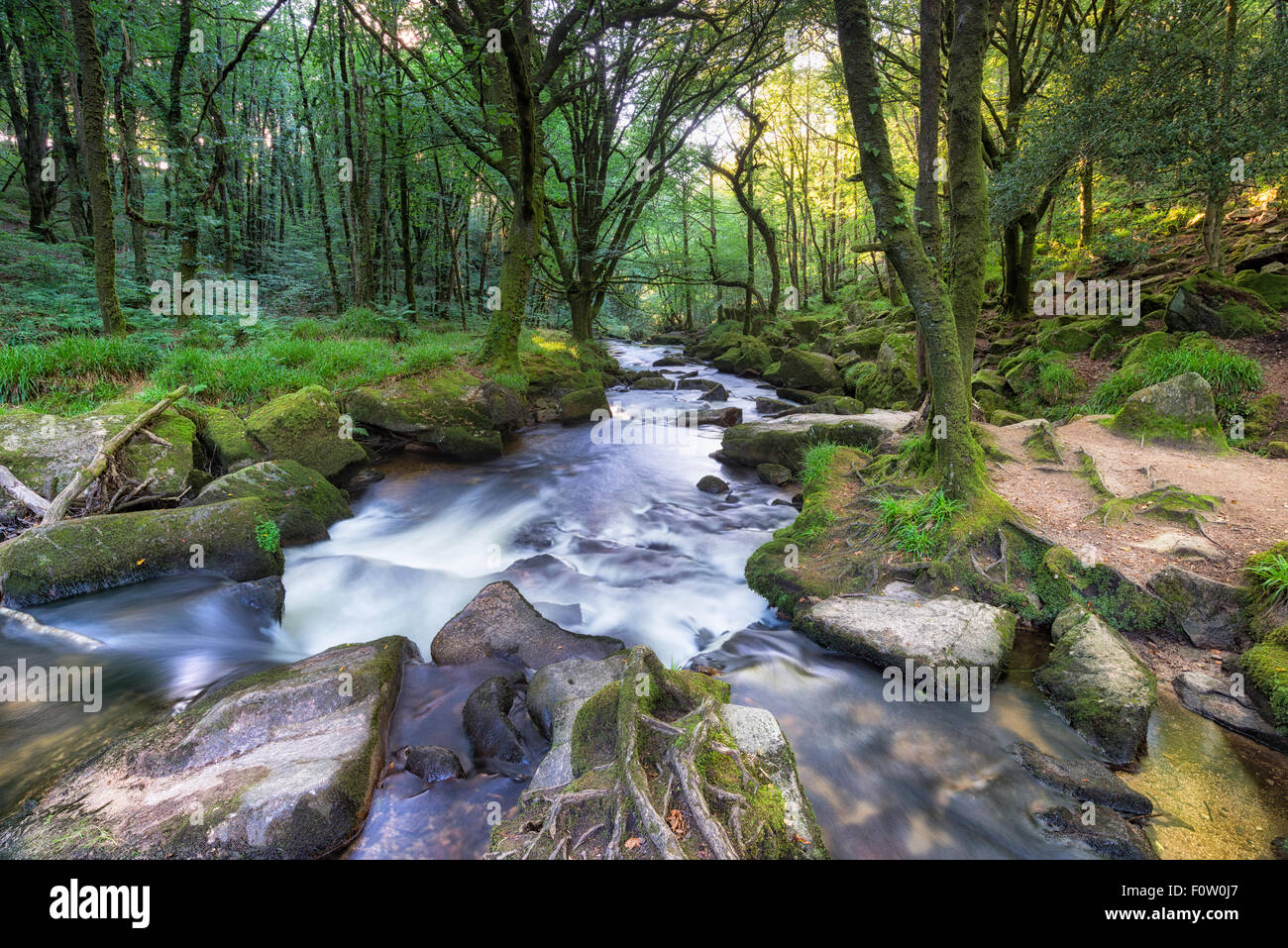 The river Fowey flowing over mossy rocks at Golitha Falls in Cornwall - Stock Image