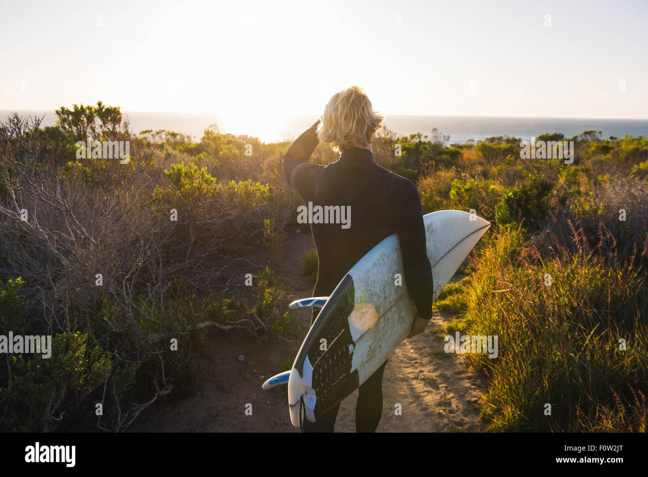 Rear view of young male surfer carrying surfboard at sunrise - Stock Image