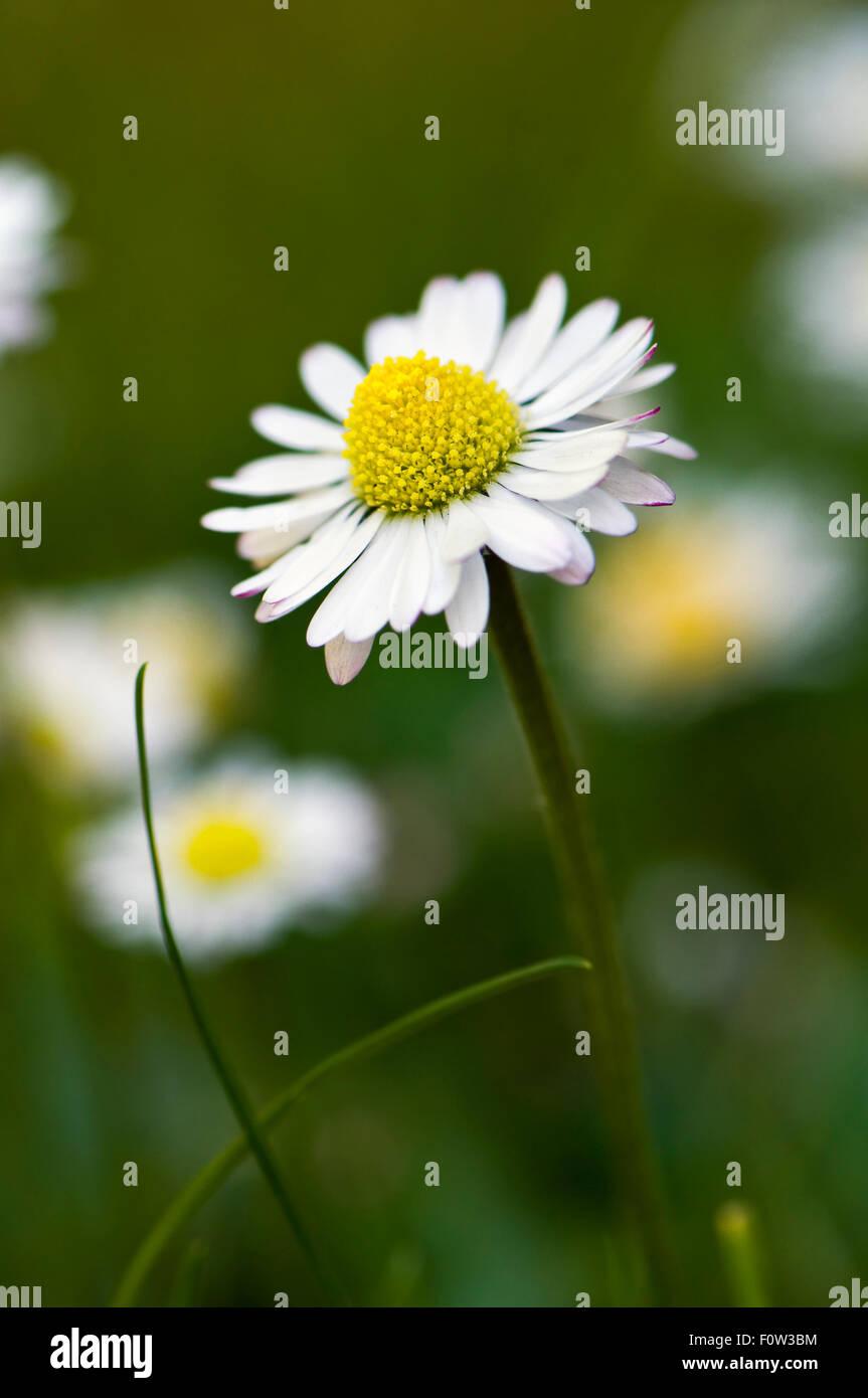 English Common Name Stock Photos English Common Name Stock Images