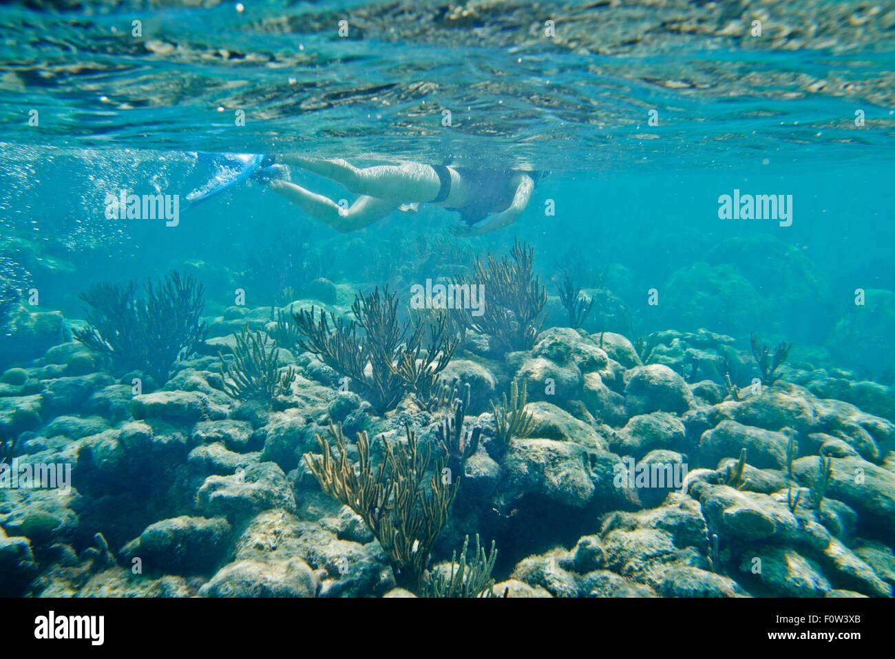 Snorkeler swimming underwater over coral - Stock Image