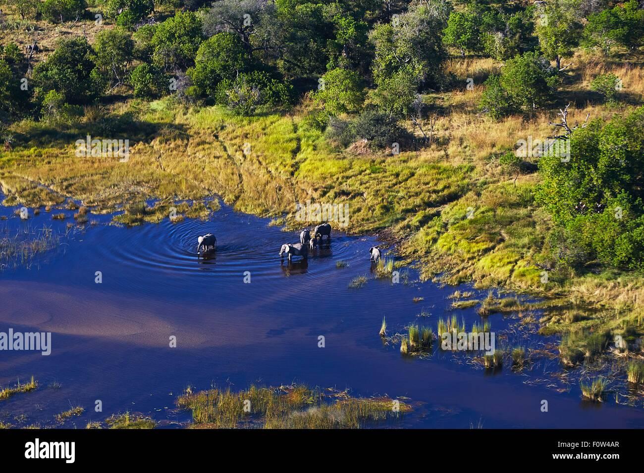 Aerial view of elephants, Maun, Okavango Delta, Botswana, Africa - Stock Image