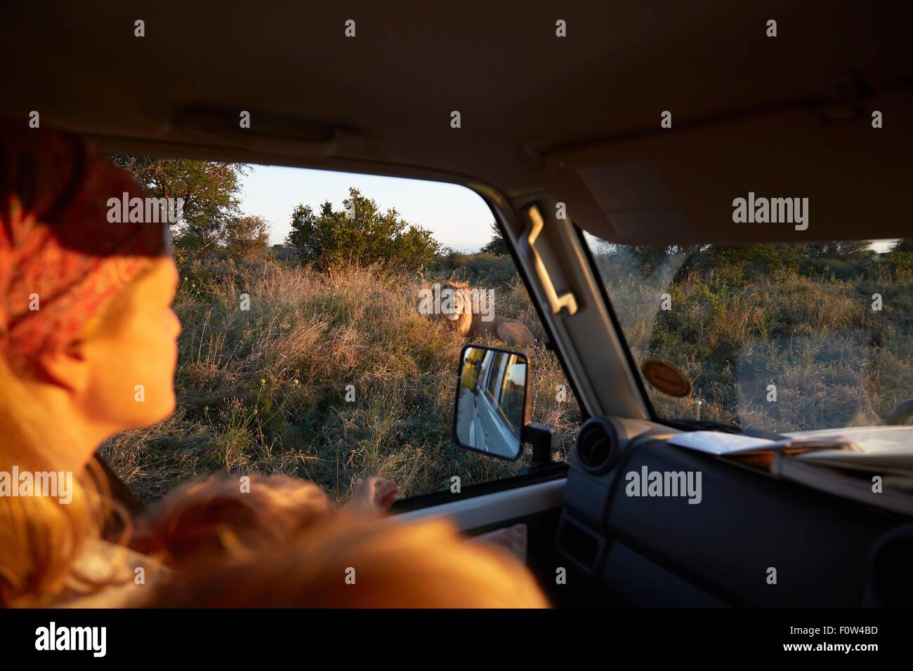 Woman travelling in vehicle, Nxai Pan National Park at sunset, Kalahari Desert, Africa - Stock Image