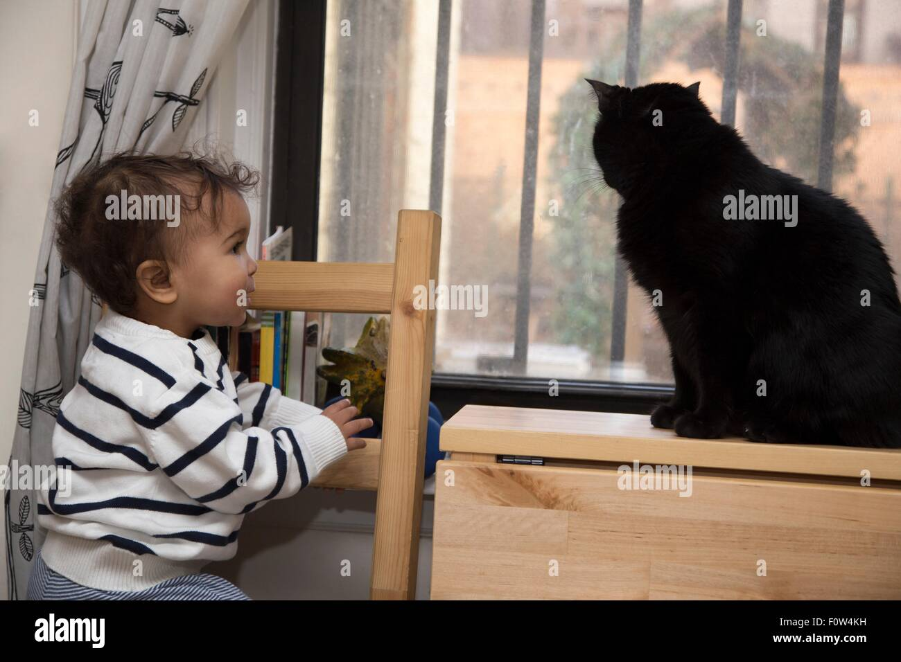 Portrait of female toddler watching cat on windowsill - Stock Image