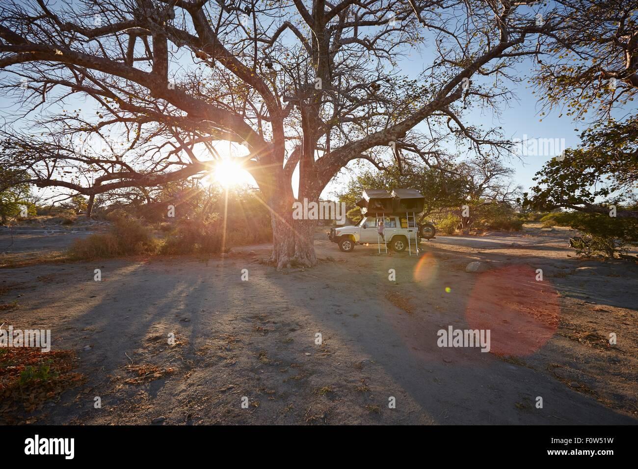 Off road vehicle parked by large tree, sunset, Gweta, makgadikgadi, Botswana - Stock Image