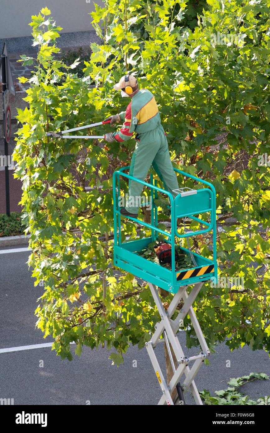 Gardener standing on a raised mechanical platform - Stock Image