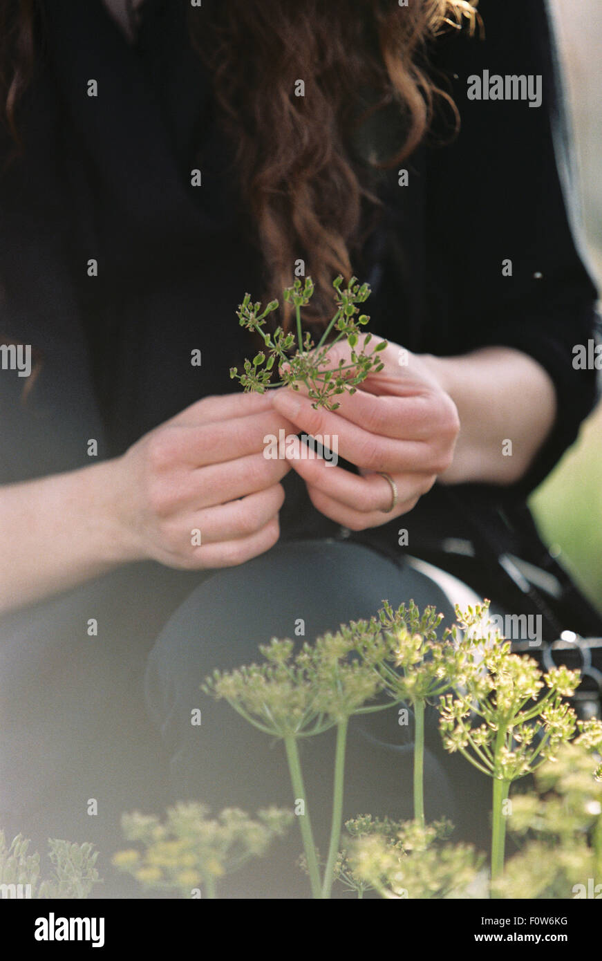 A woman picking wild flowers. - Stock Image