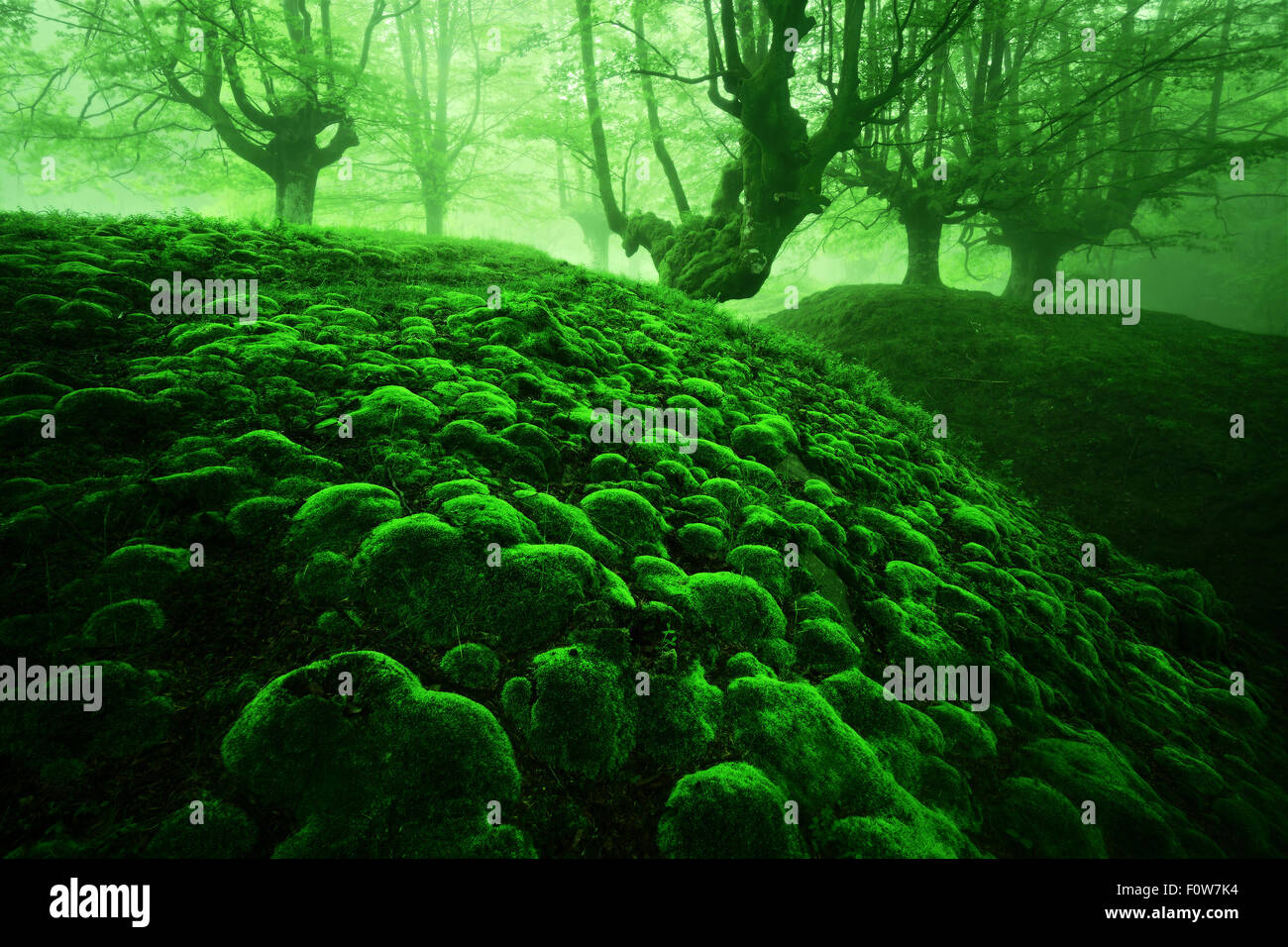 magic deep forest with moss bubbles and fog - Stock Image