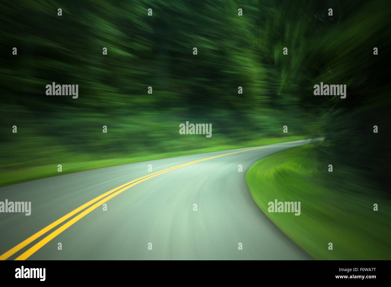 Road through forest with yellow lines and motion blur - Stock Image