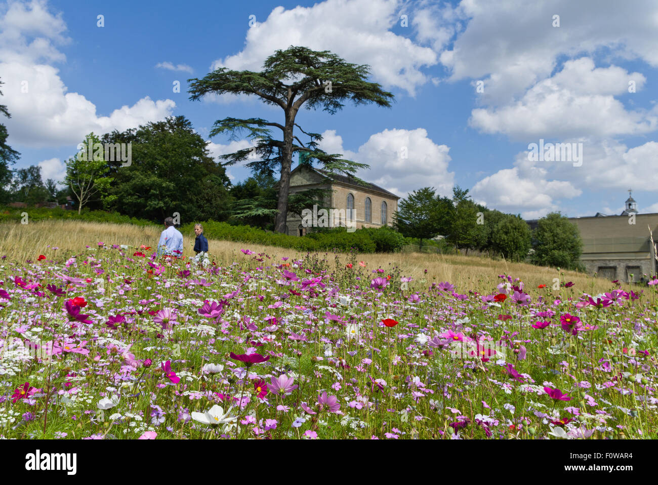 Two visitors meandering through the wildflower meadow in the grounds of Compton Verney House, Warwickshire. - Stock Image
