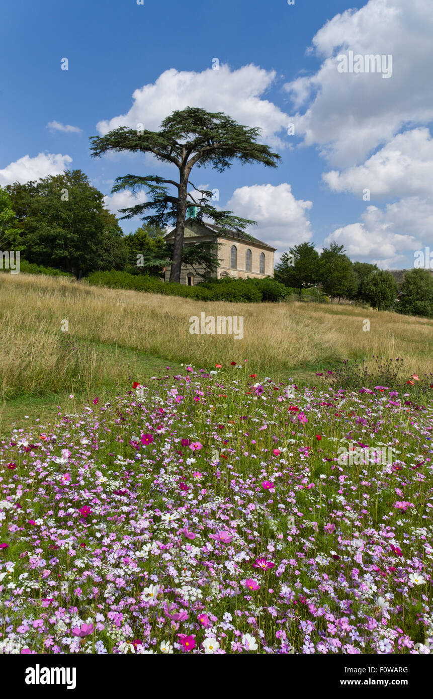 Wildflowers growing in the grounds of Compton Verney House; garden designed by Dan Pearson in the Arts & Craft - Stock Image