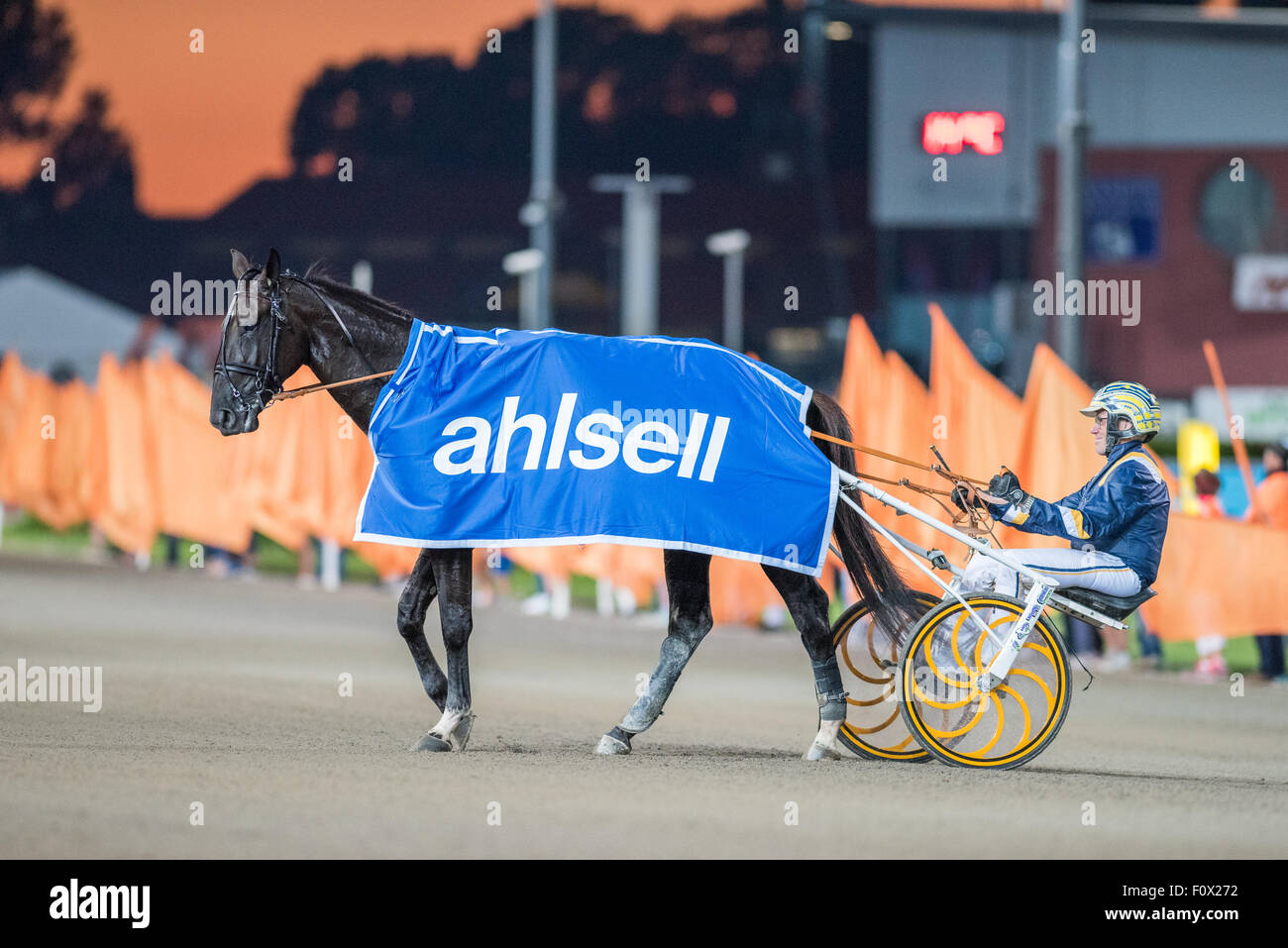 Stefan Melander behind Nuncio after winning V75 race #5 at Solvalla horse racing track on August 19, 2015 - Stock Image