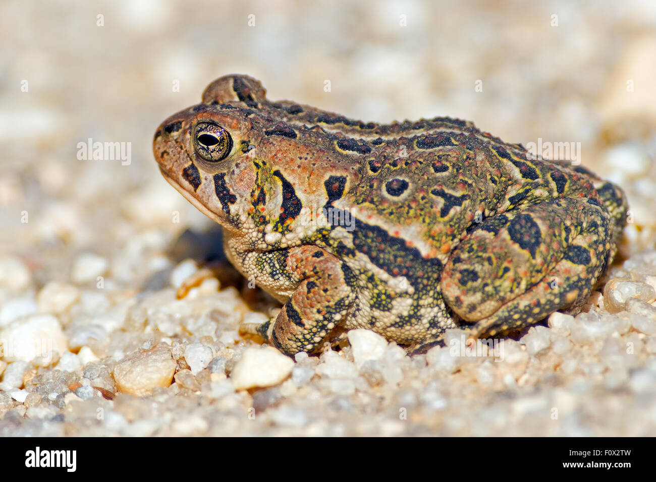 toad on the road stock photos toad on the road stock images alamy