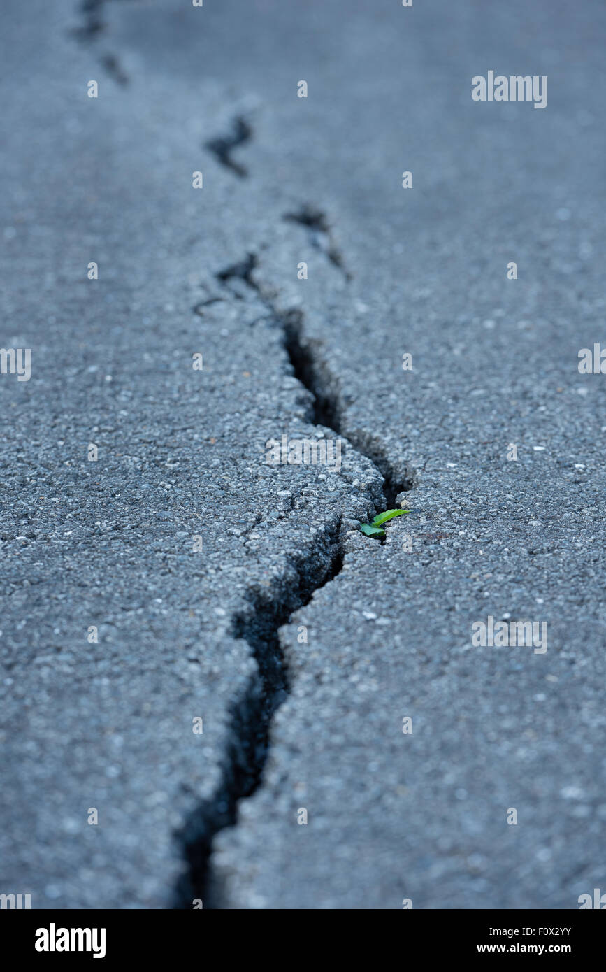 A long windy crack on a paved street with a small plant growing in it. - Stock Image