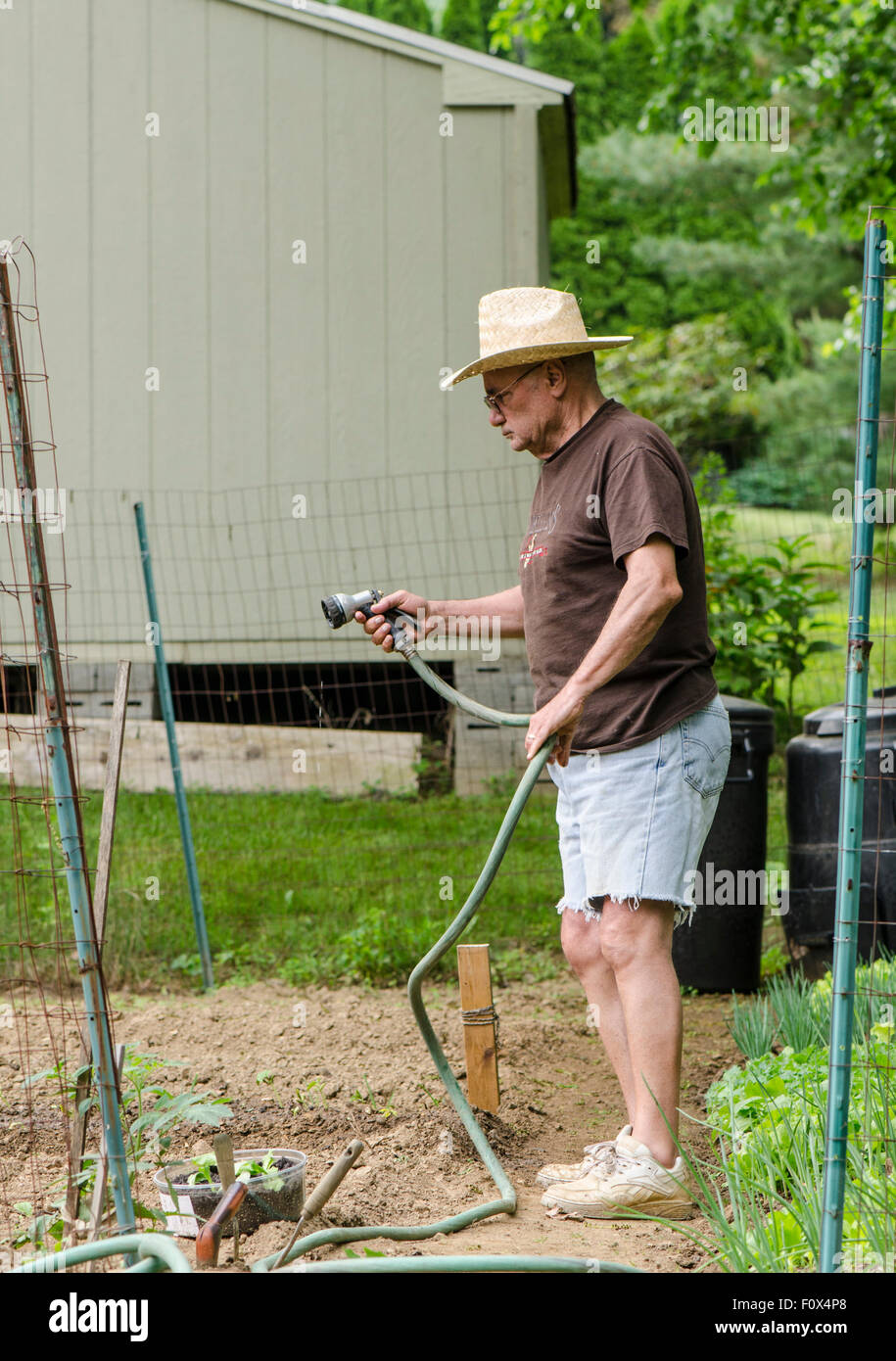 A senior man with hat watering vegetable plot in home garden. USA ... 2ef37f37f57b