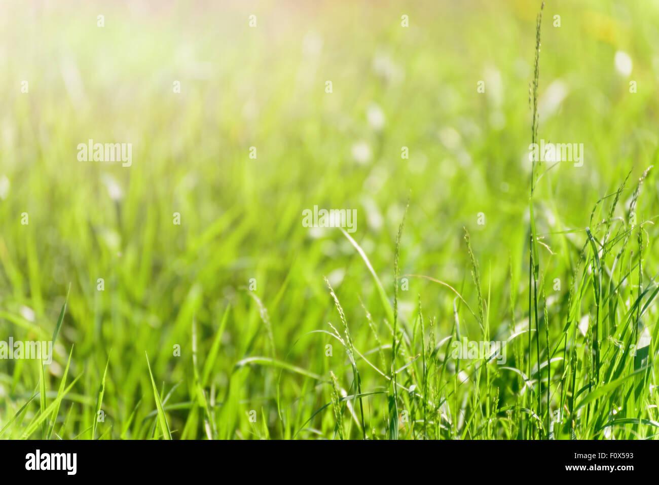 soft blur green grass background - Stock Image