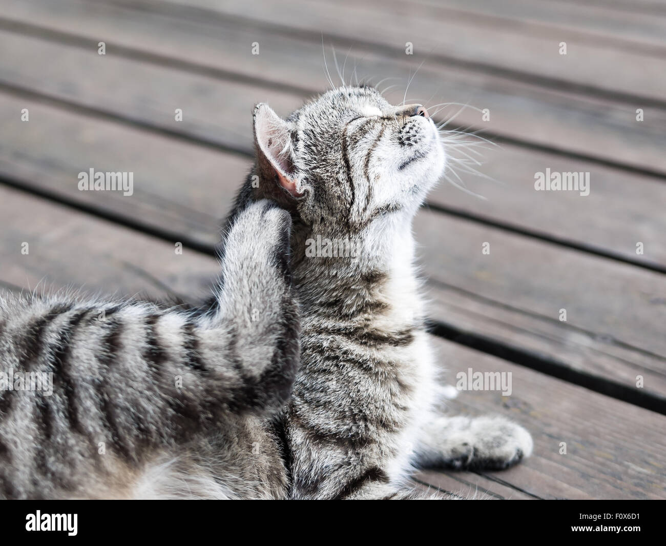 Cat enjoying scratching itself in soft colours - Stock Image