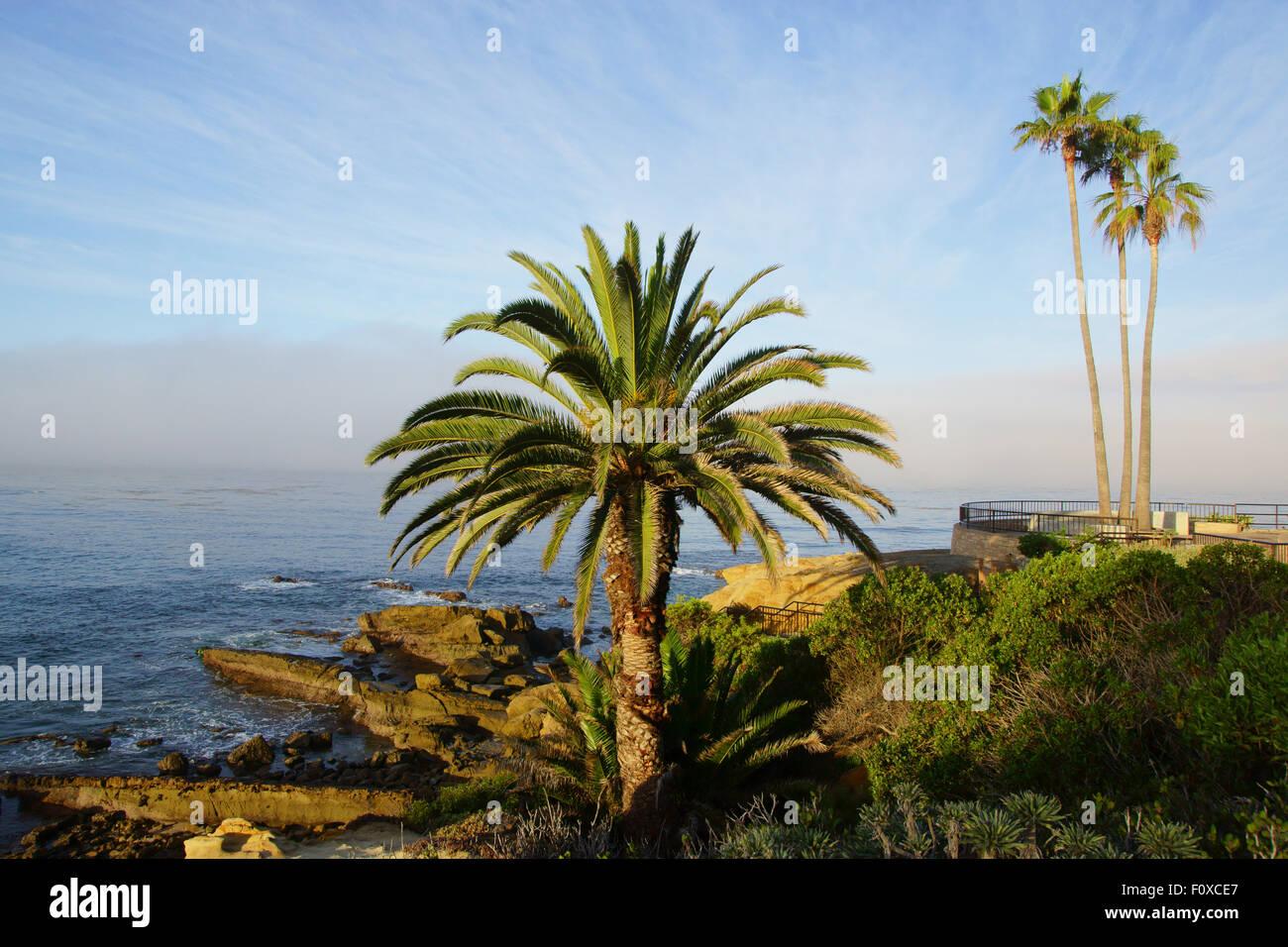 California Beach Palm Trees At Coastal Park And Pacific Ocean