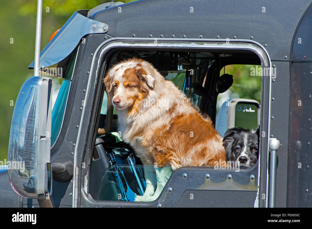 Dog Sitting In A Parked Tractor Trailer Stock Photo 86638088 Alamy