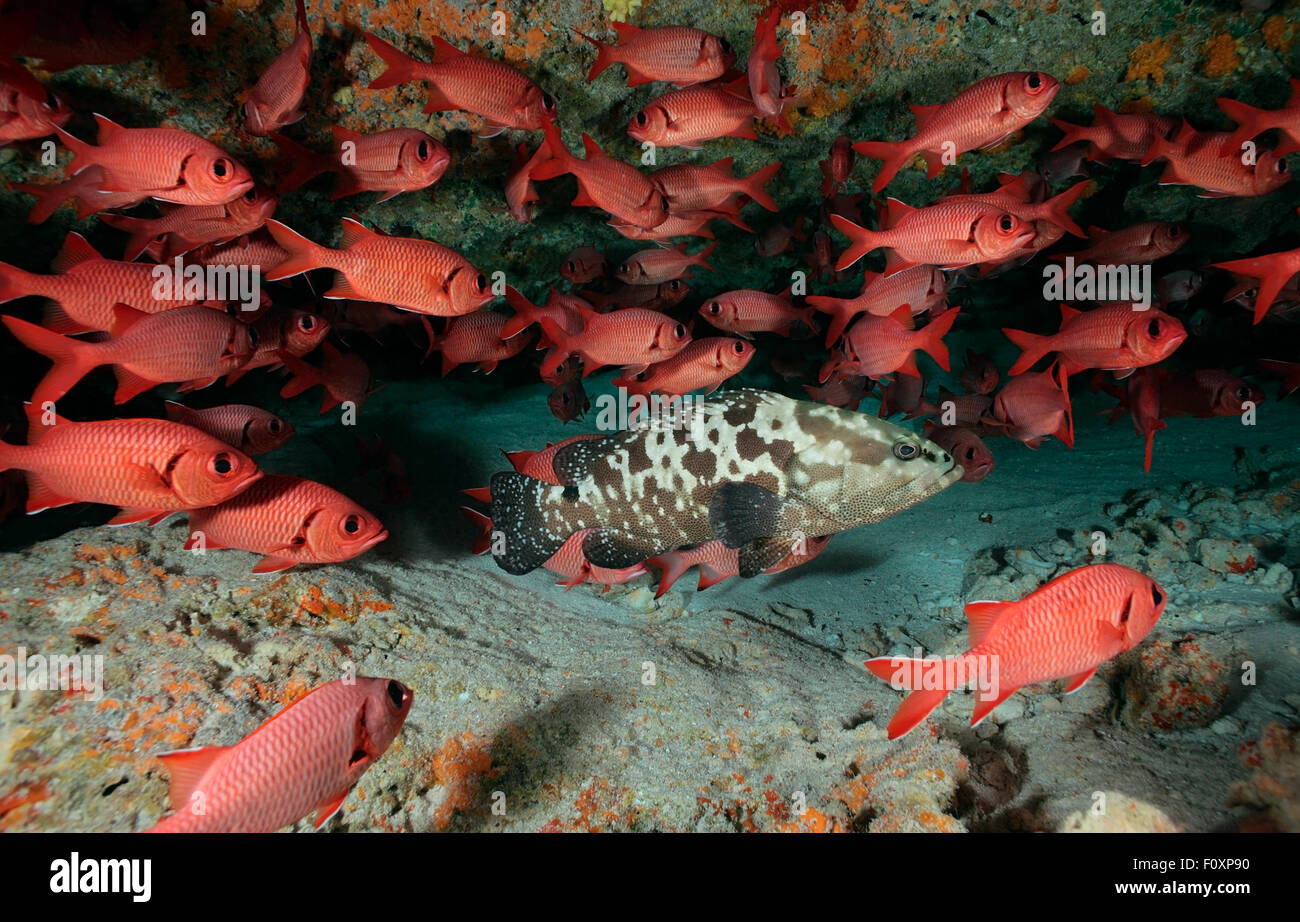 Red Fish In Cave Stock Photos & Red Fish In Cave Stock Images - Alamy