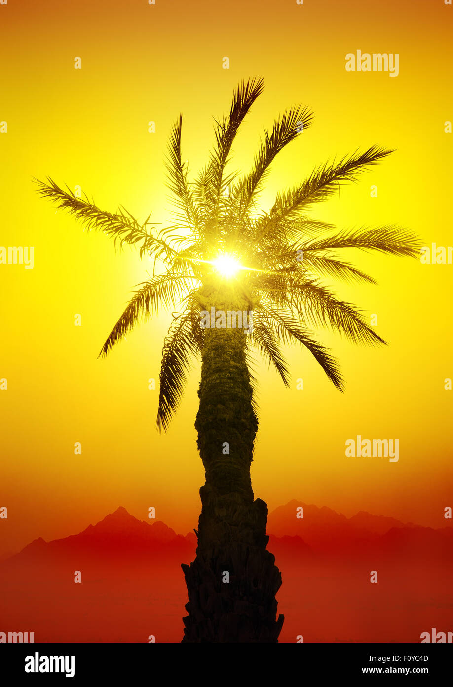 Palm in desert mountains at the sunset Stock Photo