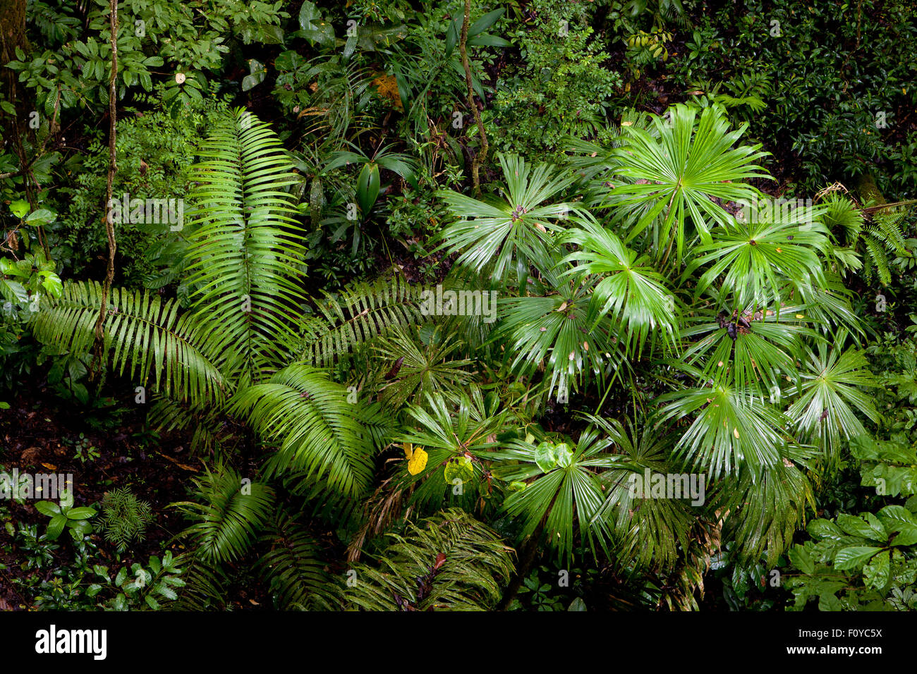 Inside the rain forest of Soberania national park, Republic of Panama. - Stock Image