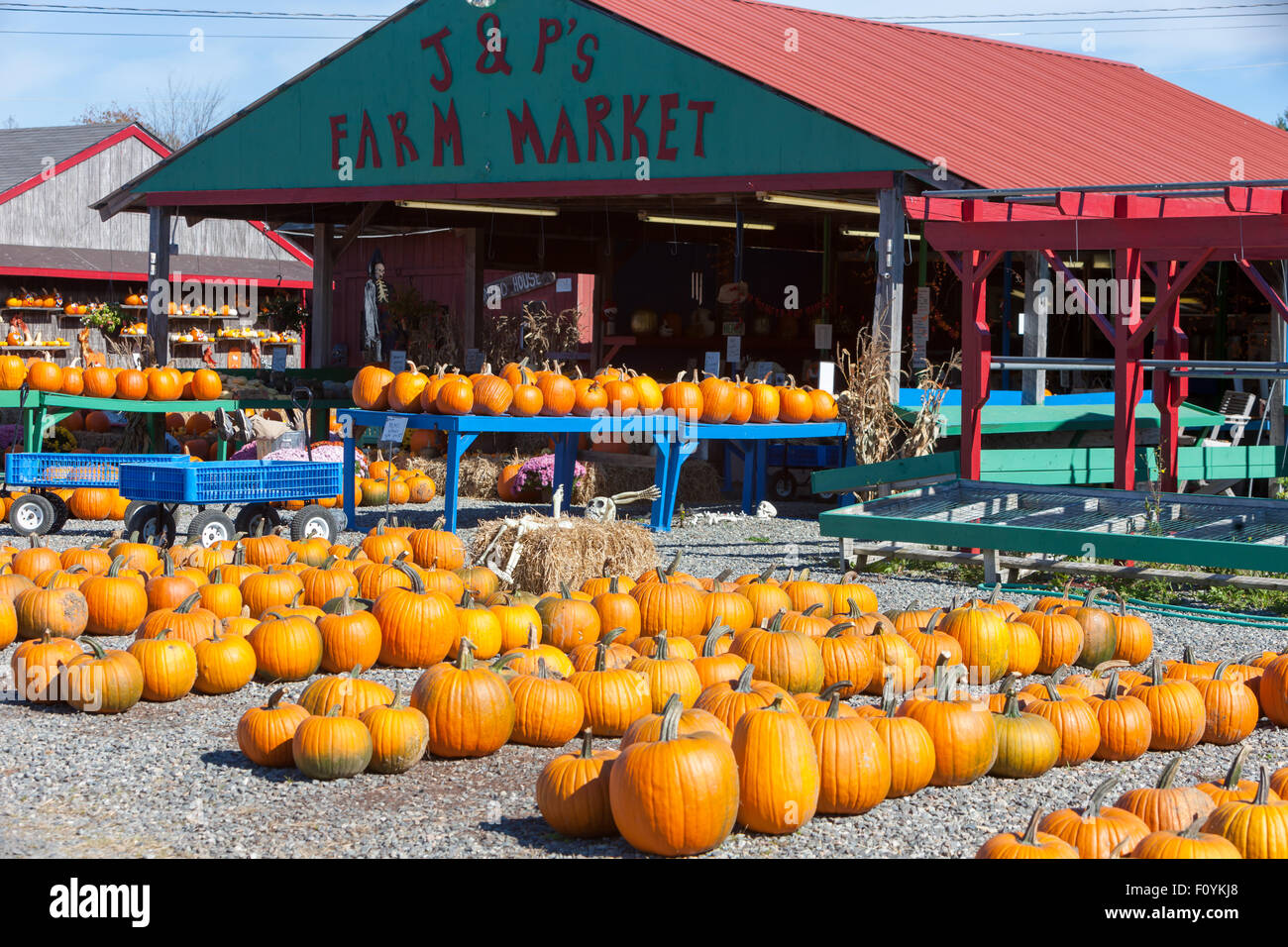 Pumpkins ready for Halloween at J & P's Farm Market in Trenton, Maine. - Stock Image