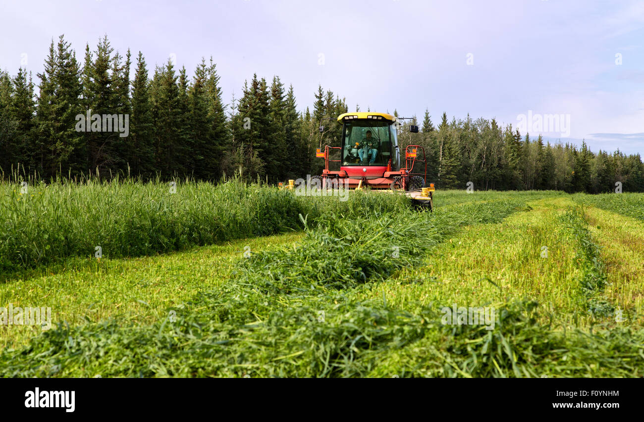 Farmer operating New Holland HW345 Mower Conditioner harvesting crop. - Stock Image