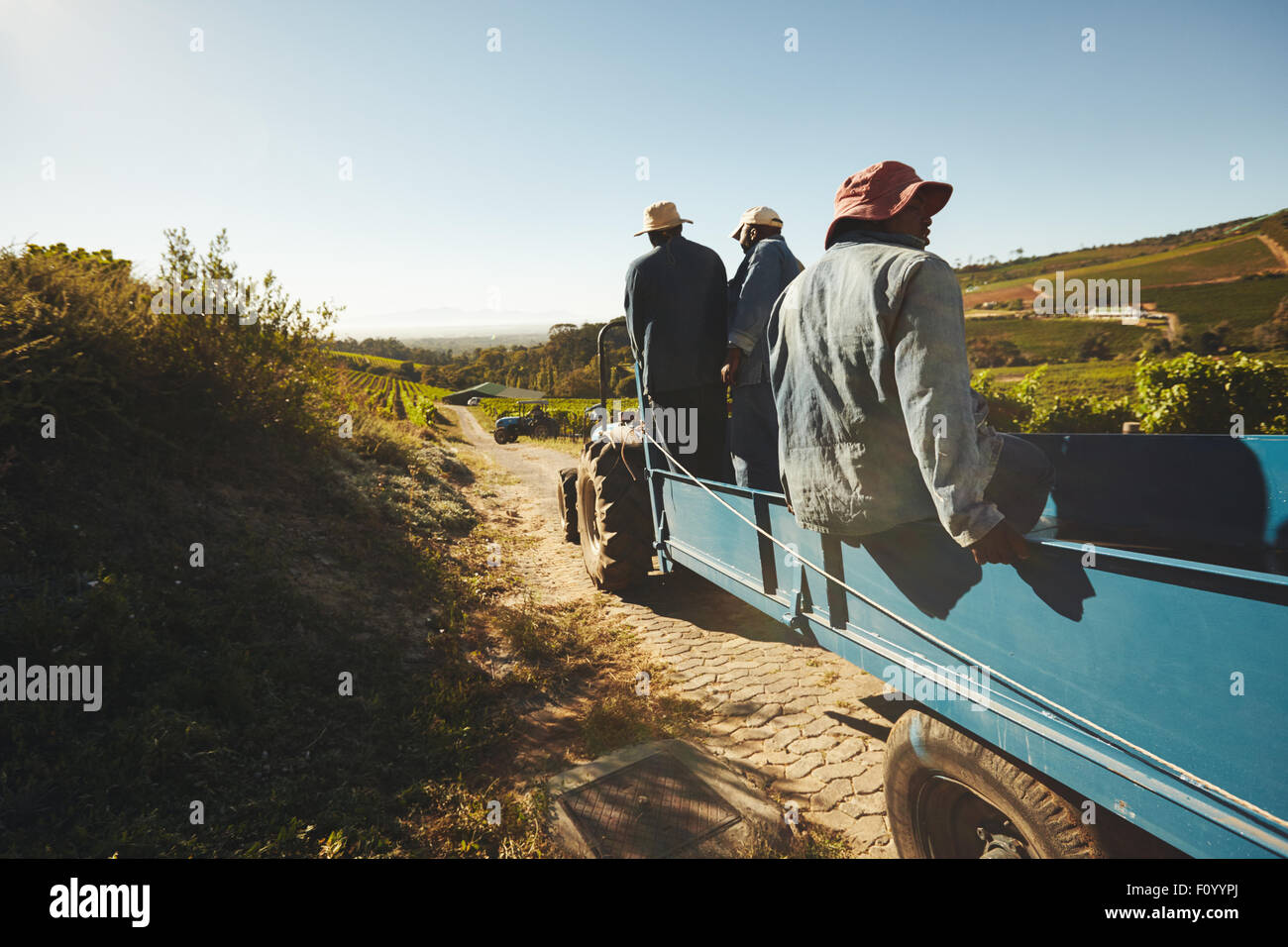 Shot of vineyard workers in tractor wagon transporting grapes to wine factory. Group of grape farmers in tractor - Stock Image