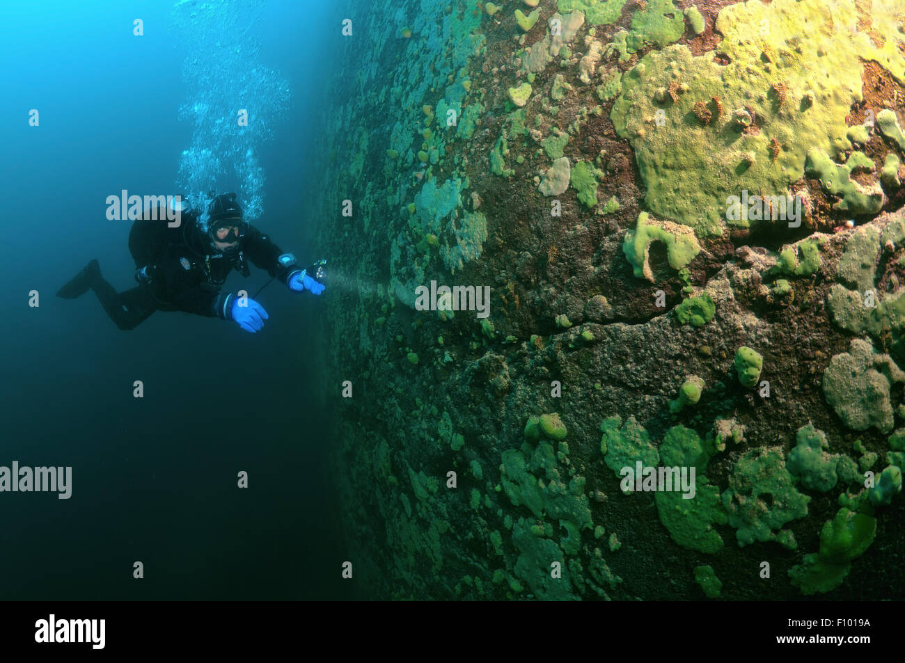 Lake Baikal, Siberia, Russia. 15th Oct, 2014. Diver, lake Baikal, Siberia, Russia, Eurasia. © Andrey Nekrasov/ZUMA Stock Photo