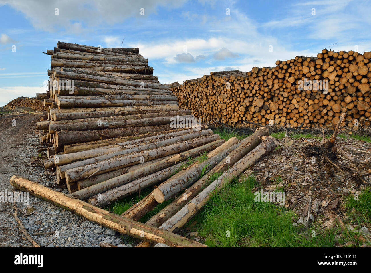 Forestry Timber Stacks in Brecon Beacons, Wales - Stock Image