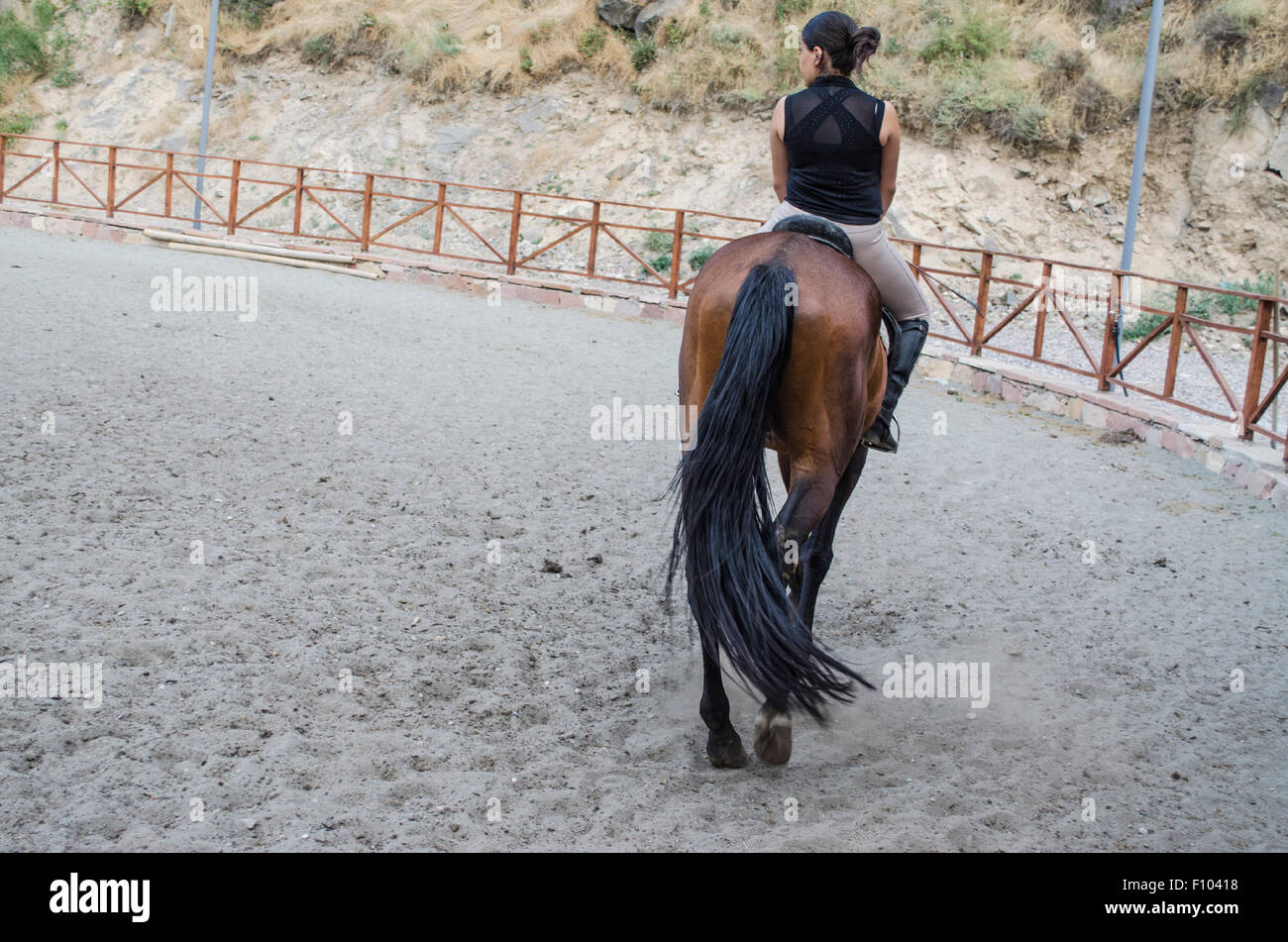 The slow step dark bay horse and horsewoman - Stock Image