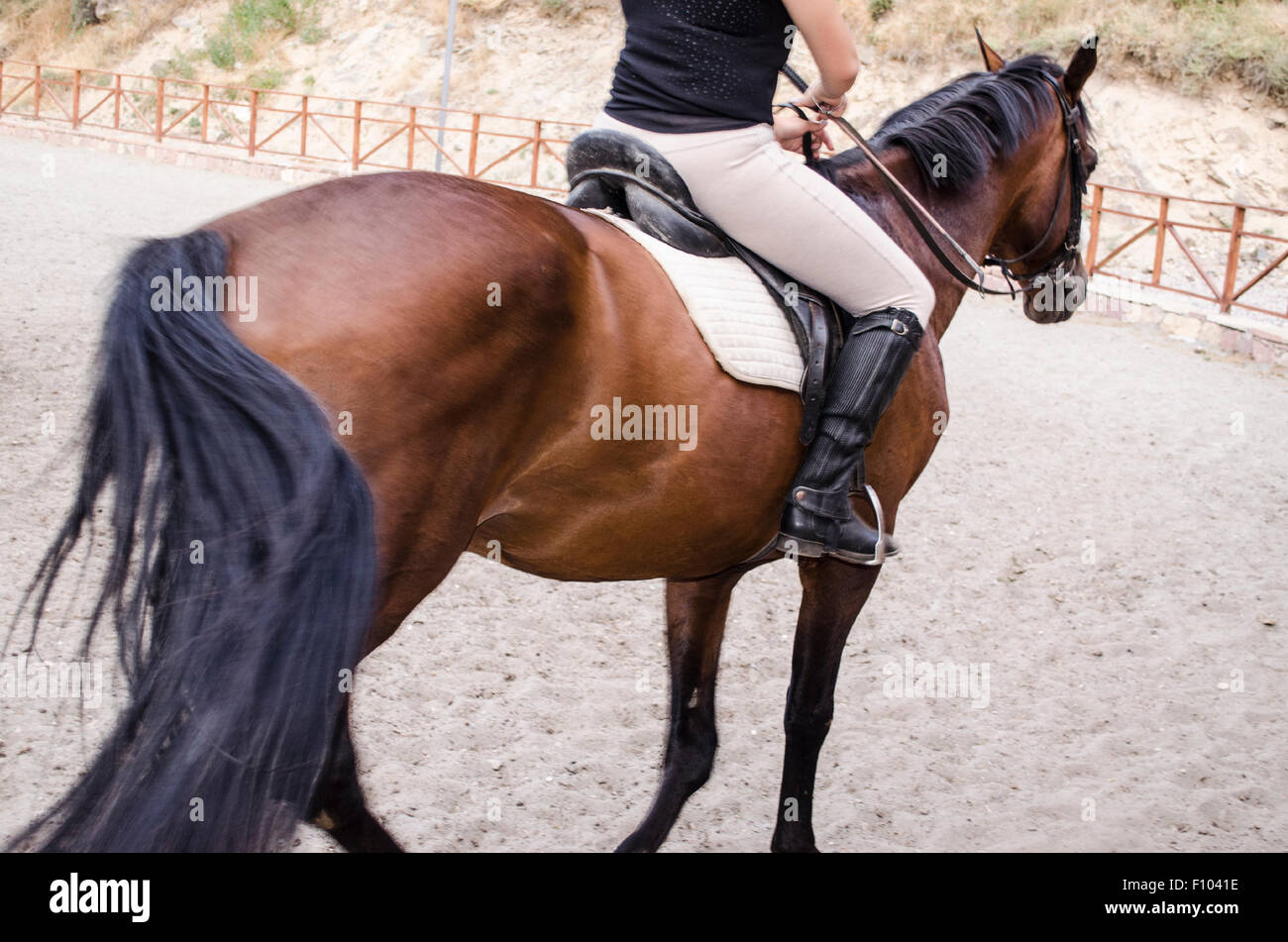 Young sportswoman straddled the dark bay horse - Stock Image