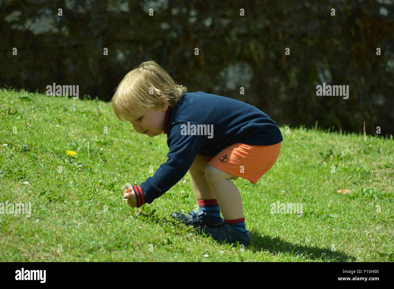 A young blonde haired boy picking a flower on a grassy bank - Stock Image
