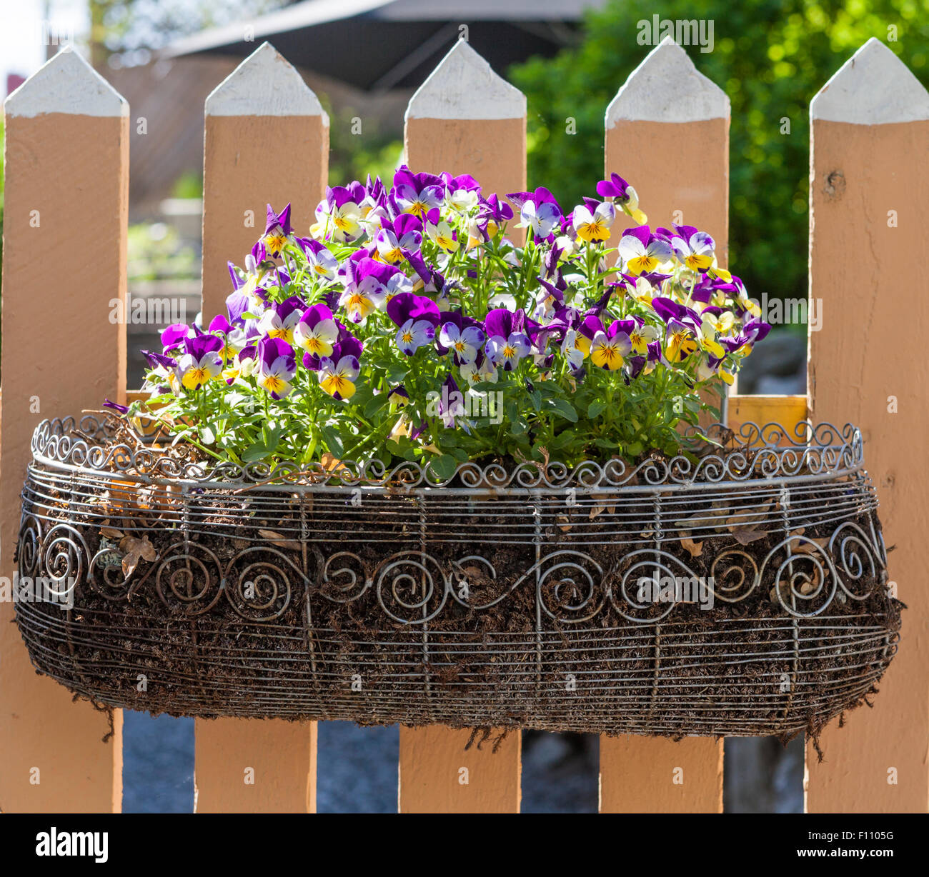Flower box on picket fence on Af Pontinsvag on Djurgarden Island in Stockholm Sweden - Stock Image