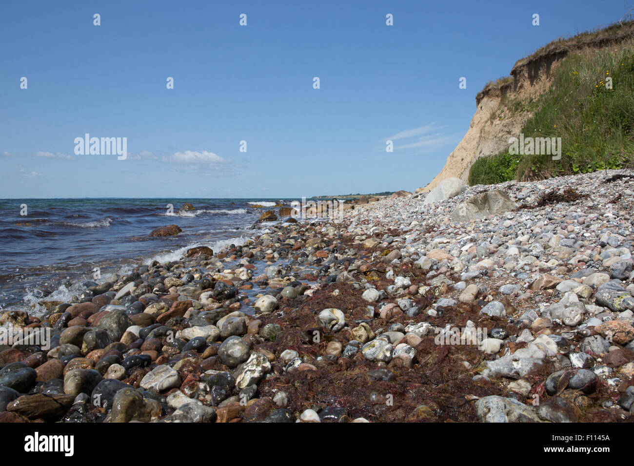Seaweed, rocky beach, and moraine cliff at Voderup Klint at Aero, Denmark - Stock Image