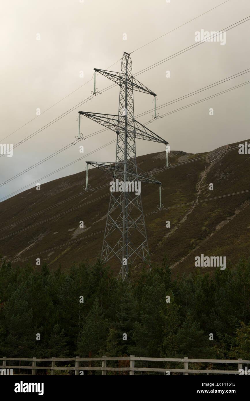Electricity pylon among conifers,  Scottish Highlands, UK, - Stock Image