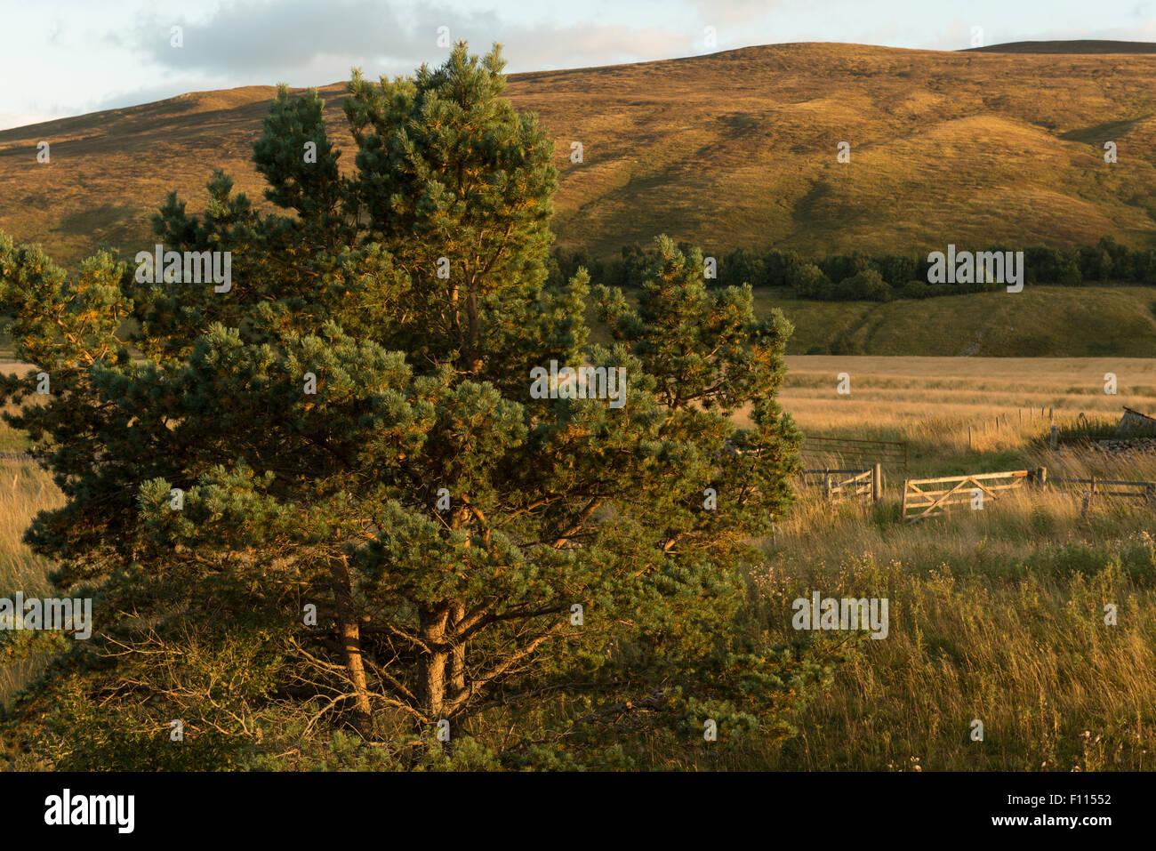 Highland landscape,North Perthshire,Scotland,UK, - Stock Image