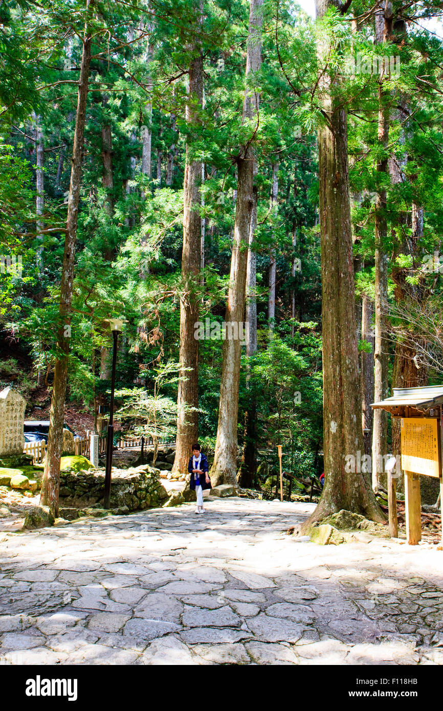 Japan, Nachikatsuura. Cobbled entrance way among tall trees of primeval forest to the Nachi Falls and Hiro Shrine - Stock Image